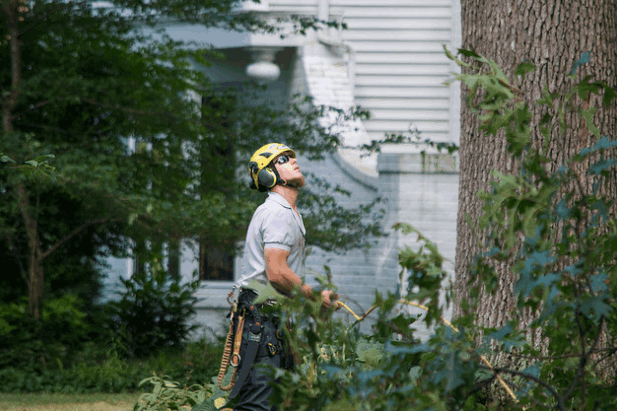 Tree Removal North Booval