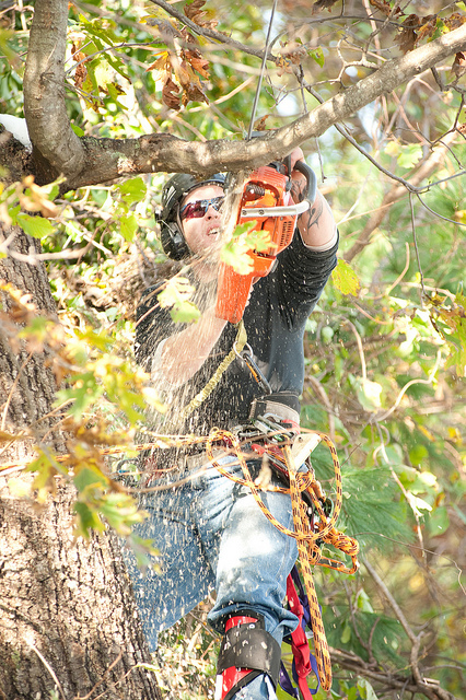 Tree Pruning North Booval